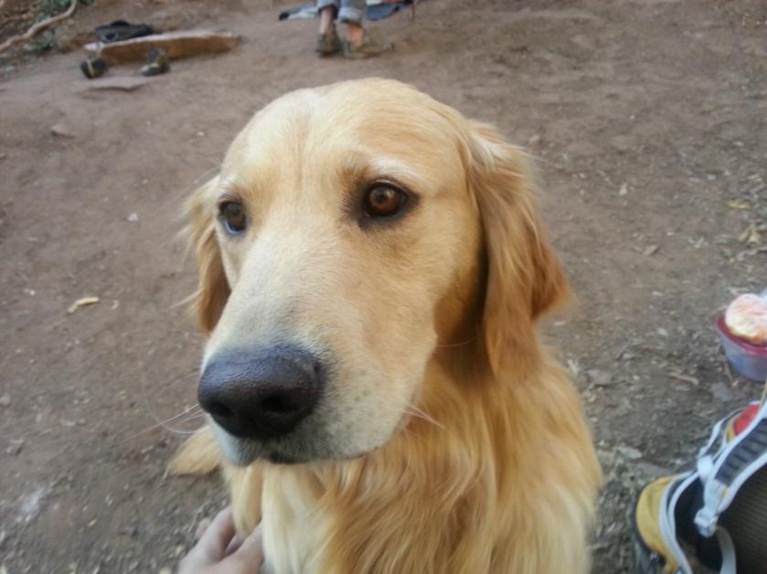 Moab BAIT climbing dog