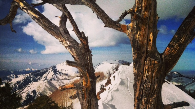 Desolation: A Day Off in the Wasatch Backcountry