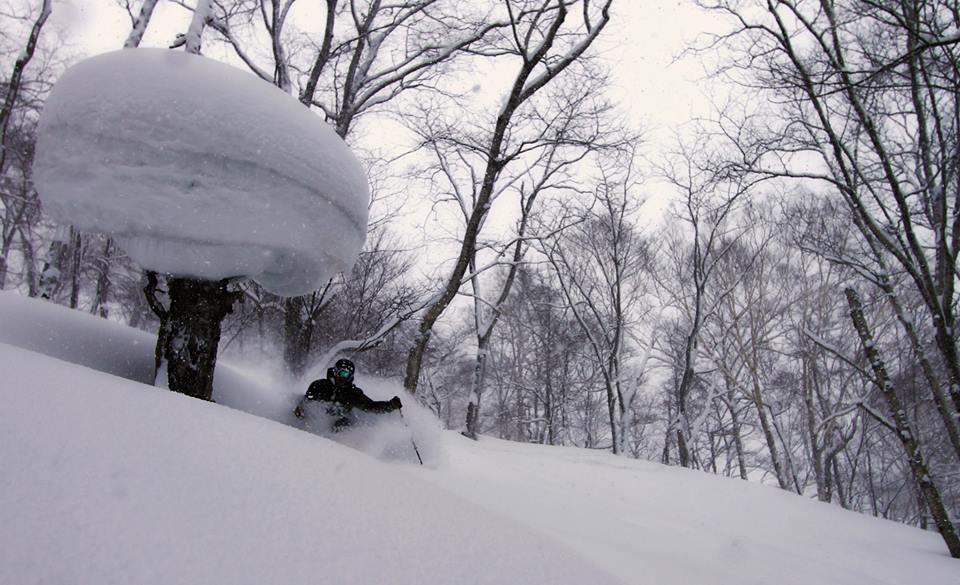 Skiing Powder in Niseko, Japan