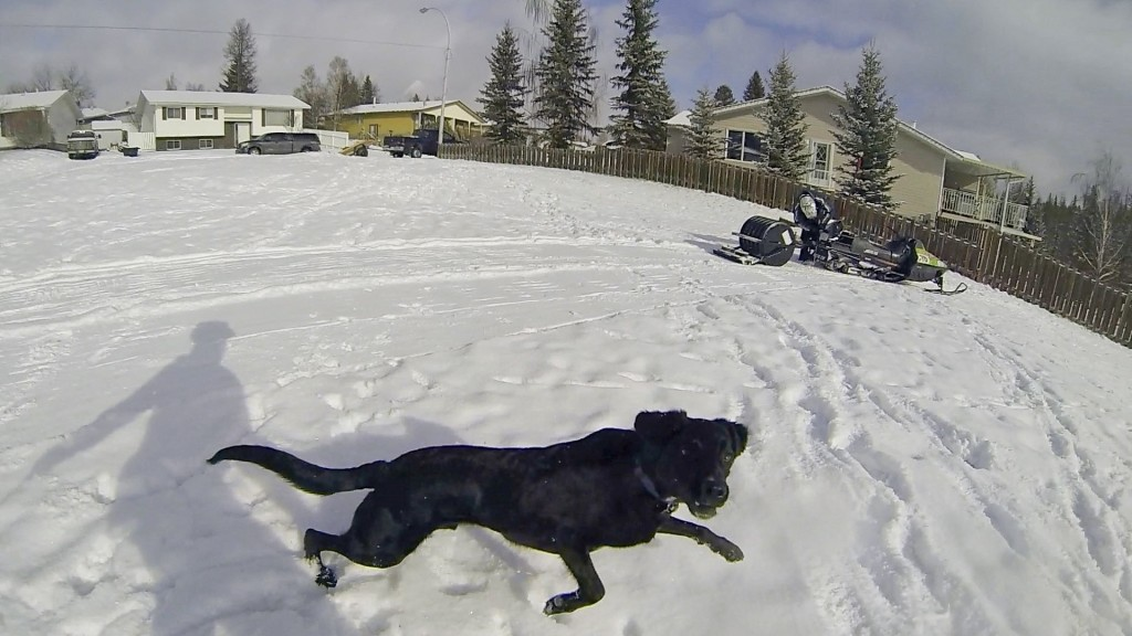 Hinton Alberta Canada Winter Magic Fat Bike - sled and dog