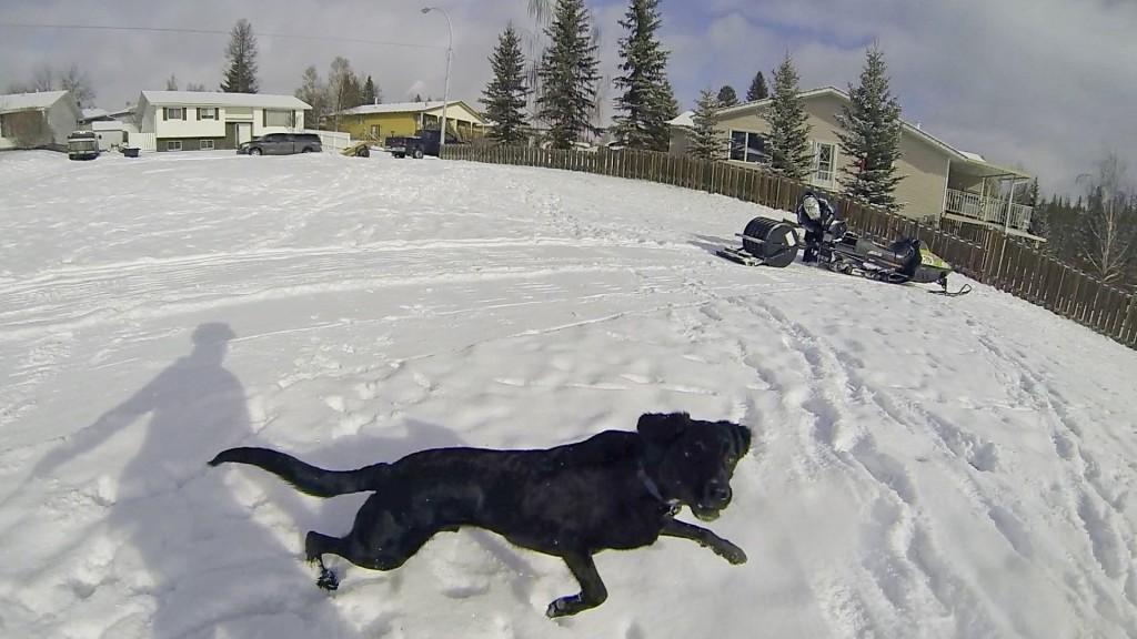 Hinton Alberta Canada Winter Magic Fat Bike - sled and dog