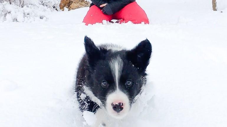 Winter Hiking Dog Tips